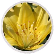 Double Asiatic Lily Named Fata Morgana Round Beach Towel