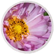 Double Click Cosmos Named Rose Bonbon Round Beach Towel