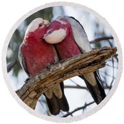 Galahs Round Beach Towel