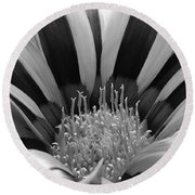 Gazania Named Big Kiss White Flame Round Beach Towel
