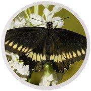 Gold Rim Swallowtail Butterfly Round Beach Towel
