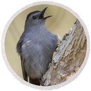 Gray Catbird Round Beach Towel