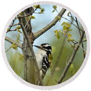 Hairy Woodpecker Round Beach Towel by Linda Freshwaters Arndt