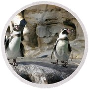 Humboldt Penguin Round Beach Towel