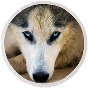 Husky  Round Beach Towel by Stelios Kleanthous