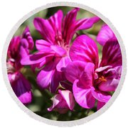 Ivy Geranium Named Contessa Purple Bicolor Round Beach Towel