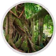 Kipahulu Banyan Tree Round Beach Towel