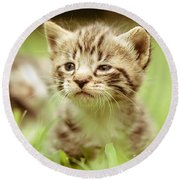 Kitty In Grass Round Beach Towel