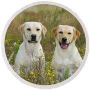 Labrador Retriever Dogs Round Beach Towel