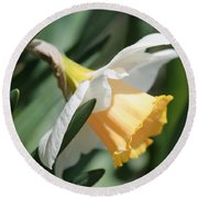 Large-cupped Daffodil Named Mrs. R.o. Backhouse Round Beach Towel