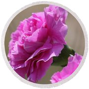Lavender Carnations Round Beach Towel
