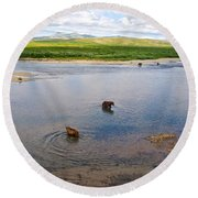 3-lay Of Land Grizzly Bears In Moraine River In Katmai National Preserve-ak Round Beach Towel