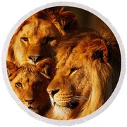 Lion Family Close Together Round Beach Towel