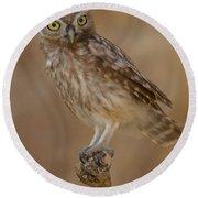 Little Owl Athene Noctua Round Beach Towel