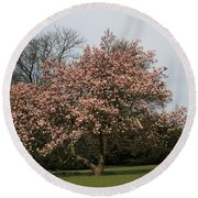 Magnolia Tree Round Beach Towel
