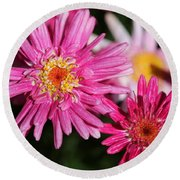 Marguerite Daisy Named Summer Song Rose Round Beach Towel