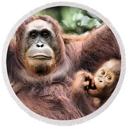 Mother And Baby Orangutan Borneo Round Beach Towel