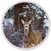 Mule Deer In Snow Round Beach Towel