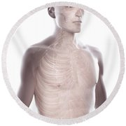 Nerves Of The Upper Body Round Beach Towel