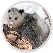 North American Opossum In Winter Round Beach Towel
