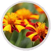 Novelty French Marigold Named Mr. Majestic Round Beach Towel