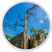 Old And Ancient Dry Tree On Top Of Mountain Round Beach Towel