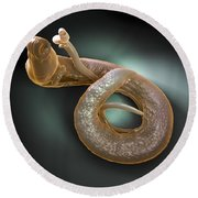 Parasitic Worm Schistosoma Round Beach Towel