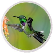 Purple-bibbed Whitetip Hummingbird Round Beach Towel