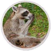 Raccoons Round Beach Towel