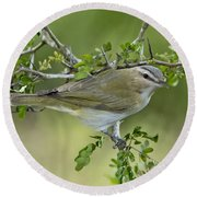 Red-eyed Vireo Round Beach Towel