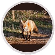 Red Fox In Prospect Park Round Beach Towel
