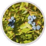 Ripe Maine Low Bush Wild Blueberries Round Beach Towel