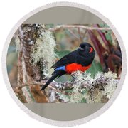 Scarlet-bellied Mountain-tanager Round Beach Towel