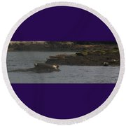 Seals Series 2  Round Beach Towel