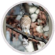 Sharp-shinned Hawk 2 Round Beach Towel