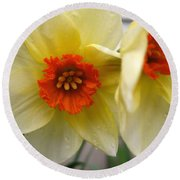Small-cupped Daffodil Named Barrett Browning Round Beach Towel