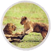 Small Lion Cubs Playing. Tanzania Round Beach Towel