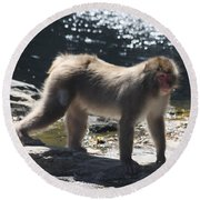 Snow Monkey Round Beach Towel