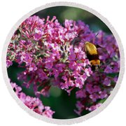 Snowberry Clearwing Hummingbird Moth Round Beach Towel