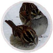 3 Sparrows Round Beach Towel