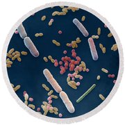 Species Of Bacteria Round Beach Towel
