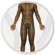 The Nerves Of The Body Round Beach Towel
