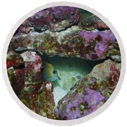 Tropical Fish In Cave Round Beach Towel