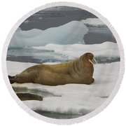 Walrus Resting On Ice Floe Round Beach Towel