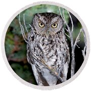 Whiskered Screech Owl Round Beach Towel