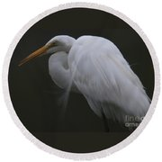 White Heron Portrait Round Beach Towel