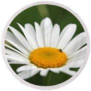 Wildflower Named Oxeye Daisy Round Beach Towel