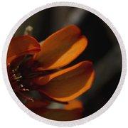 Wiliwili Flowers - Erythrina Sandwicensis - Kahikinui Maui Hawaii Round Beach Towel