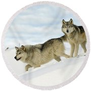 Wolves In Winter Round Beach Towel