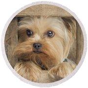 Yorkshire Terrier Dog Round Beach Towel